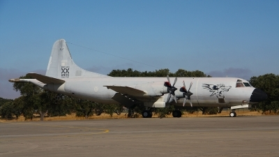 Photo ID 135486 by Paul Newbold. Portugal Air Force Lockheed P 3P Orion, 14803