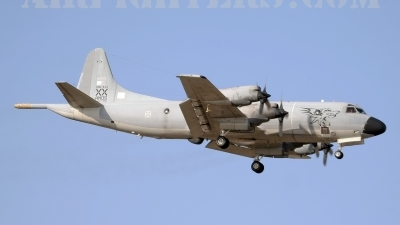 Photo ID 9301 by Stephen J Muscat. Portugal Air Force Lockheed P 3P Orion, 14803